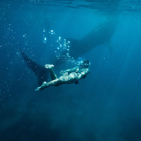 whale-shark-tours-cancun