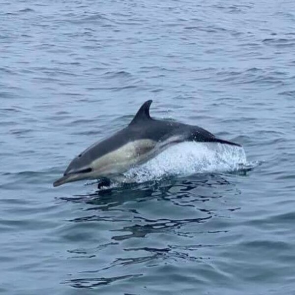 dolphin watching cornwall