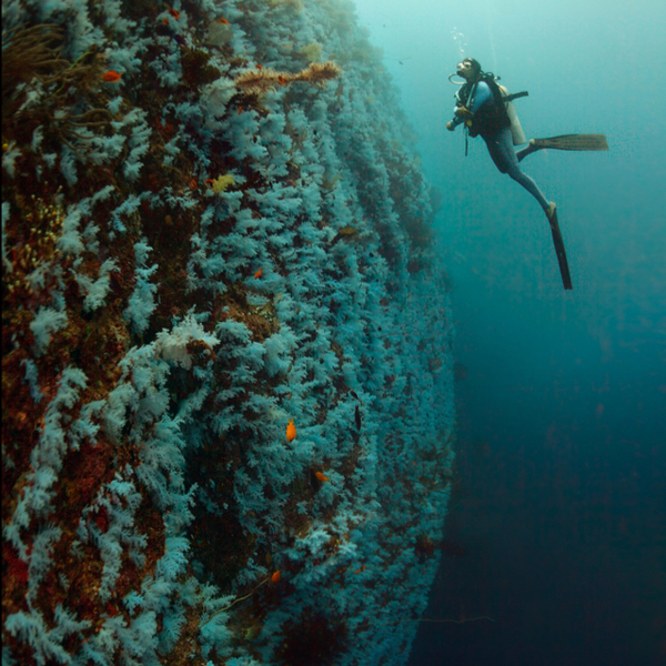 diver at the great white wall in fiji
