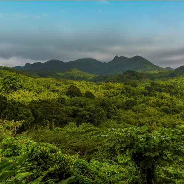 view of forest over Mount Saint Catherine in Grenada