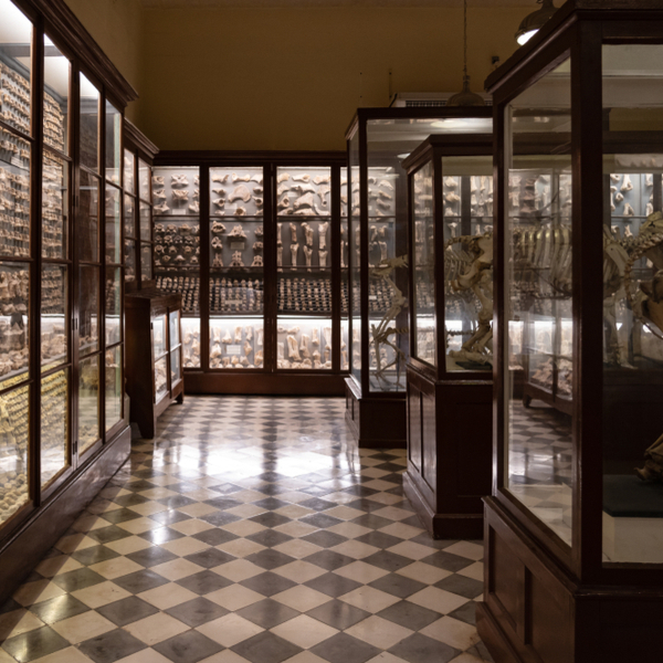 artefacts on display at the Ghar Dalam Museum in malta