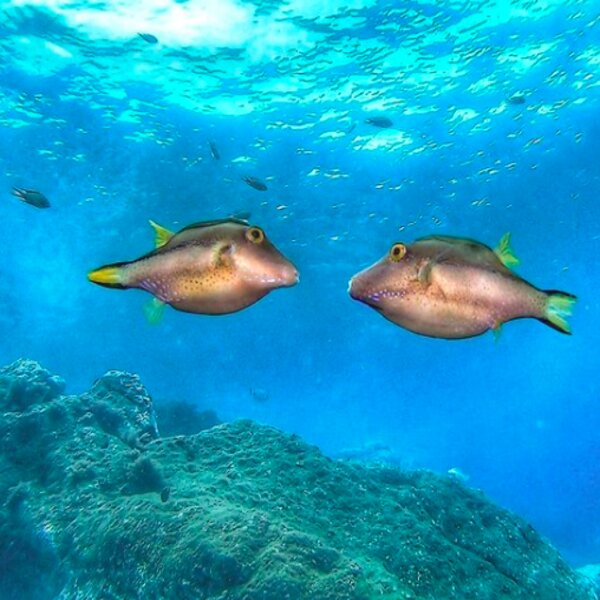 diving with fish in madeira island