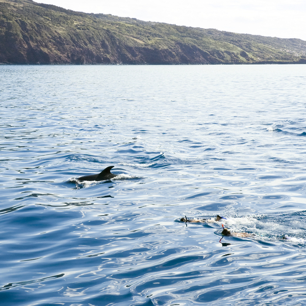 snorkelling with dolphins at beach in madeira