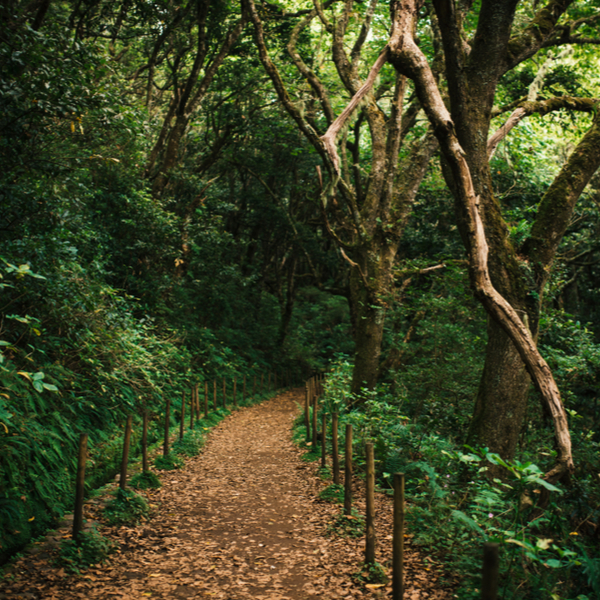 Laurissilva forest hike madeira
