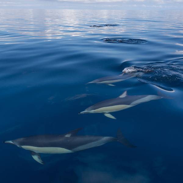dolphin and whale watching in auckland