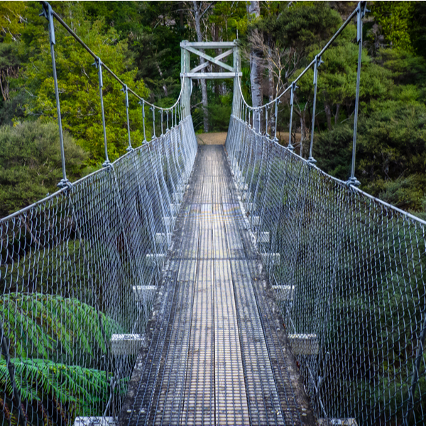 forest walkway in auckland
