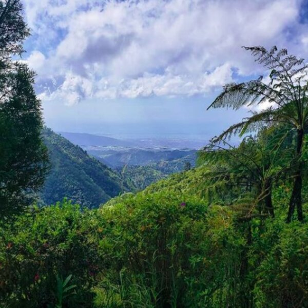 view of blue mountain landscape in jamaica