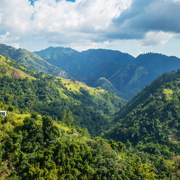 hiking at the blue mountains national park in jamaica