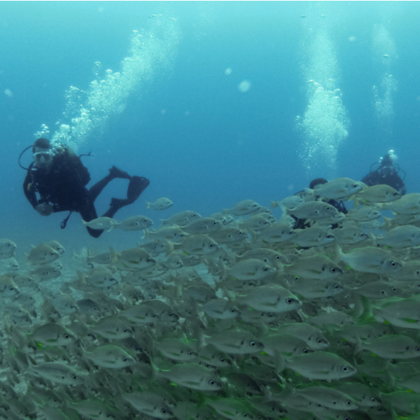 divers with a shoal of fish in fuerteventura