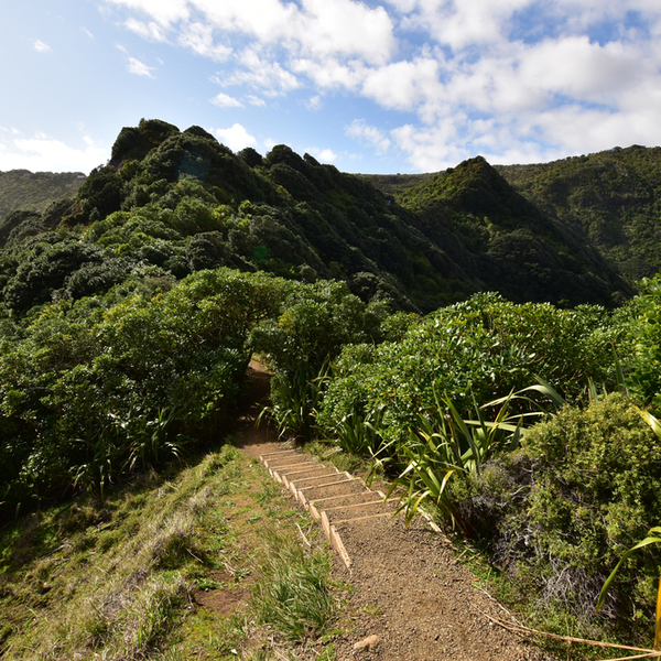 hiking path at waitakere national park in auckland