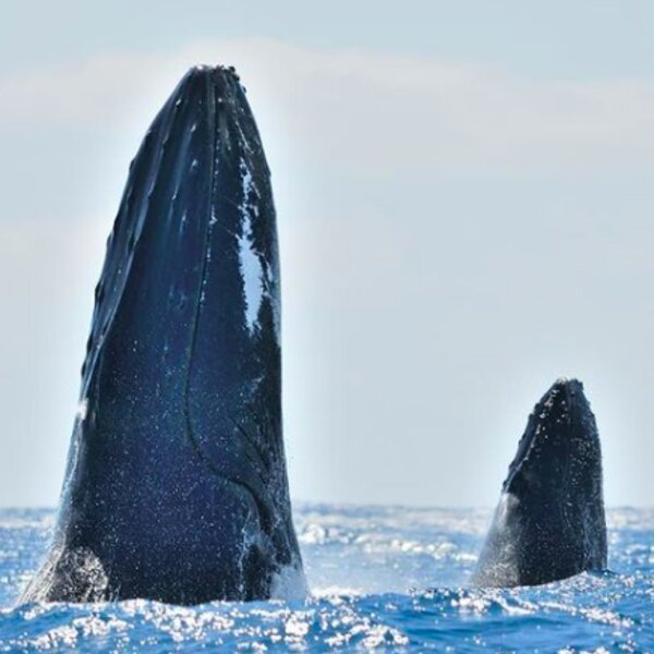 whale watching tour azores