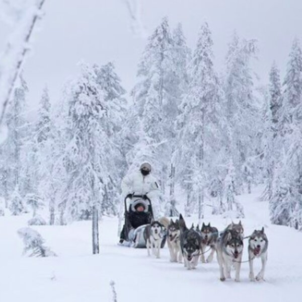 husky sled ride in snowy lapland