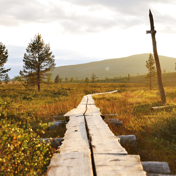 hiking trail in the sunshine in lapland