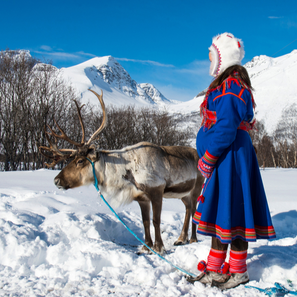 young sami girl with reindeer in lapland