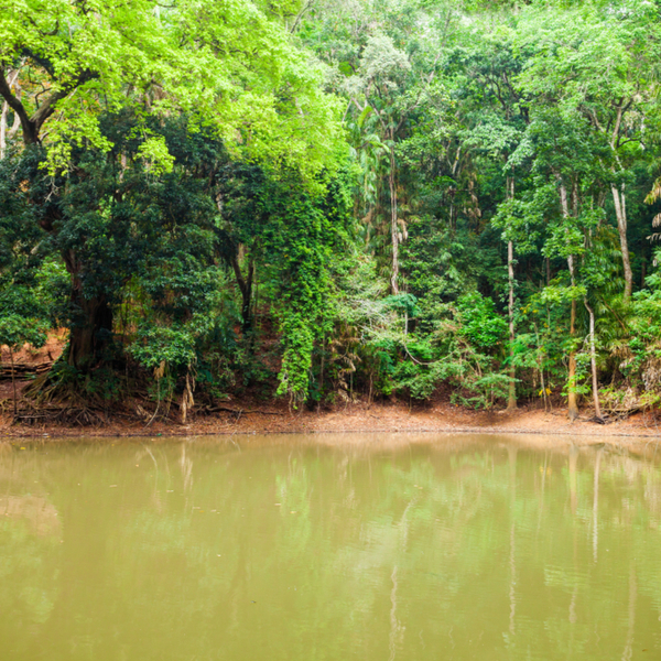 river and forest at Udawattakele Sanctuary in sri lanka
