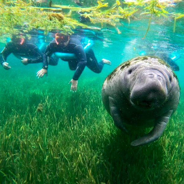 swimming with manatees in orlando